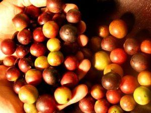 Promueven fortalecimiento de cadenas de valor en frutos tropicales