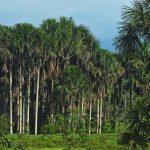 Garantizan conservación de los ecosistemas del país