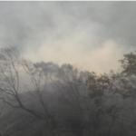 Identifican factores que favorecen incendios forestales en la sierra