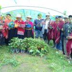 Impulsan repoblamiento del árbol de la quina en 10 regiones