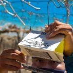 La Libertad: Implementan acciones contra mosca de la fruta