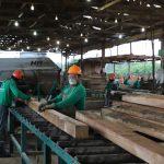 Anuncian Programa de Fomento y Gestión Sostenible de la Producción Forestal