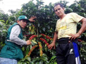 San Martín: Buscan optimizar cultivo de café en provincia de El Dorado