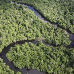 Mas de 500 nuevas represas en planeación o construcción dentro de áreas protegidas