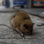Cambios en uso de la tierra aumentan riesgo de brotes de enfermedades zoonóticas