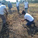 Inician plantación de plátano bellaco en San Martín