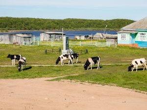 Junín: Recuperarían aguas de la industria láctea con bacterias autóctonas