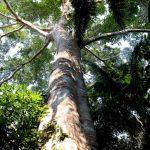 Proyectan conservar 10 millones de hectáreas de bosques comunales hacia el 2030