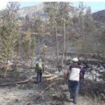 Extinguen incendios forestales en seis regiones del país