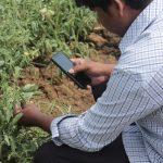 Teléfonos móviles ayudarán a pequeños agricultores a elevar producción