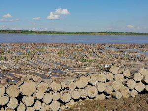 Ucayali: El tráfico ilegal de madera no se detiene