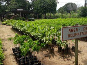 San Martín: Entregan más de 15 mil plantones a Tarapoto