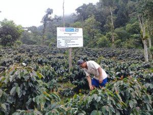 Instalarán más de 600 mil plantones de café de alta calidad genética en el Vraem