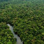 Minam publica proyecto de lineamientos vinculados a la conservación de bosques