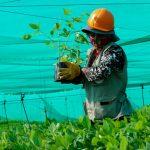 Madre de Dios: Reforzarán reforestación en la Reserva Nacional Tambopata