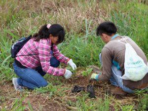 San Martín: Reforestan 431 hectáreas en los distritos de Shunté y Pólvora