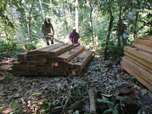 """Ucayali: Incautan madera motoaserrada en límites de la Comunidad Nativa """"Tres Colinas"""""""