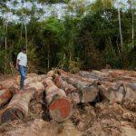 Alertan sobre casos de deforestación en la Amazonía peruana