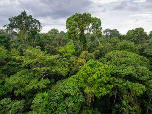 El Perú reforzará conservación de bosques y la reducción de emisiones de carbono