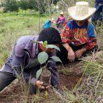 Día del Árbol: Producirán más de 155 000 plantones de quina y aliso