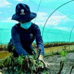 Ayacucho: Vivero del bicentenario produce más de 100 mil plantones forestales