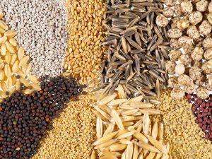 Descartan ingreso de semillas y peces modificados genéticamente