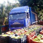 Huánuco: Productores de Yuyapichis comercializan 850 toneladas de plátano