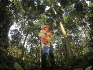 San Martín: Promueven que productores registren plantaciones forestales