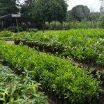 Proponen producir 11 millones de plantones para reforestar en San Martín
