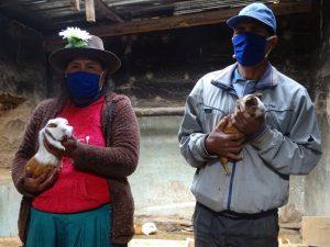 Huánuco: Distrito de Chacabamba destaca por la crianza de cuyes