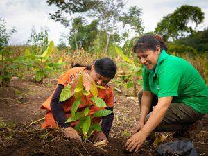 Asháninkas de Río Tambo optimizarán producción y comercialización cacaotera