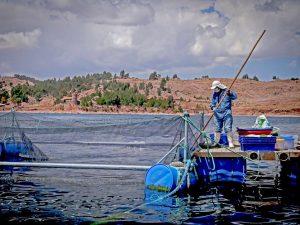 Proponen fortalecer la sanidad acuícola en las economías de APEC