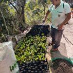 Producirán más de 56 000 plantones de quina y aliso en Cusco