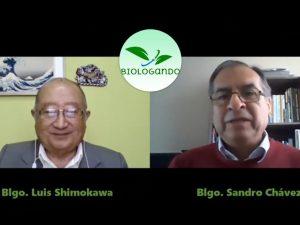 Programa de consumo de anchoveta acabaría con la desnutrición en el Perú