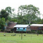 Denunciarán ante CIDH violaciones de derechos por gobiernos de la cuenca amazónica