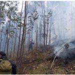Extinguen incendios forestales en Puno y Cajamarca