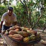Alistan actividades por el Día del Cacao y Chocolate Peruano