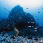 Reserva Nacional Dorsal de Nasca será la primera área natural protegida del mar peruano