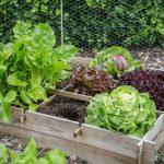 Cómo crear un huerto de vegetales en casa