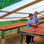 Huánuco: Implementan 200 secadores solares para mejorar calidad cacaotera