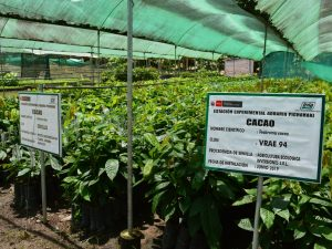 Impulsan proyectos de innovación para mejorar calidad del cacao