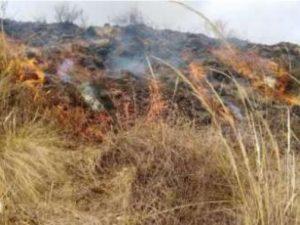 Extinguen incendios forestales en Puno y Pasco