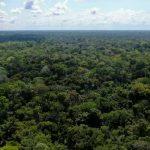 Minam garantiza conservación de un millón doscientos mil hectáreas de bosques comunales