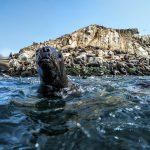 Desarrollarán el primer mapa de ecosistemas marinos del Perú