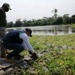 Ucayali: Devuelven 41 tortugas charapas a su hábitat