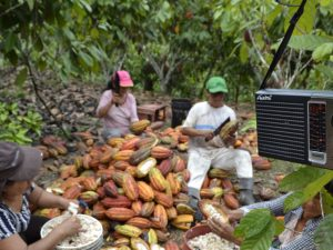 Devida: Programa radial orienta a 40 mil familias agricultoras