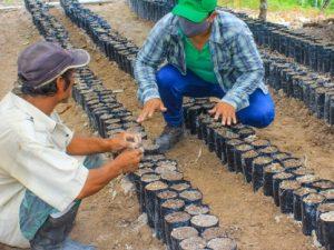 Huánuco: Instalarán 90 viveros familiares en dos provincias
