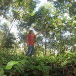 3300 productores accederán a financiamiento de plantaciones forestales