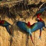 Alistan actividades por el Día de las Áreas Naturales Protegidas del Perú