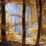 Europa hacia una estrategia forestal que garantice sostenibilidad de bosques